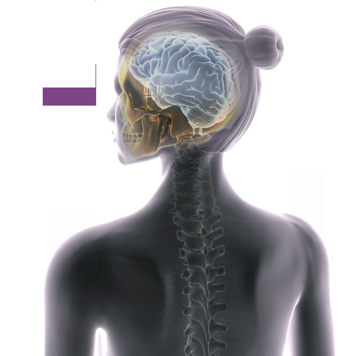 Cranial mobile